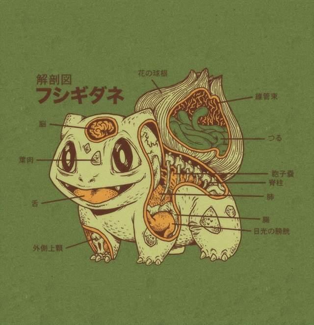 Pokemon Anatomy | Wiki | Anime Amino